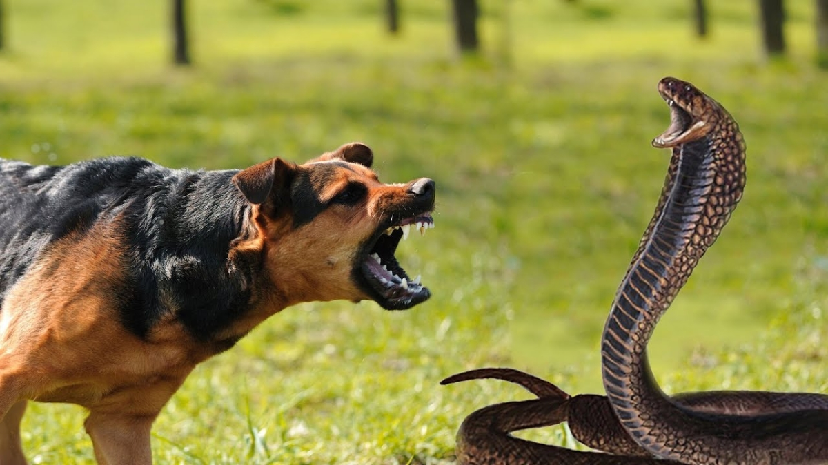 Dog sacrifices life to save sleeping owner from poisonous snake in Telangana