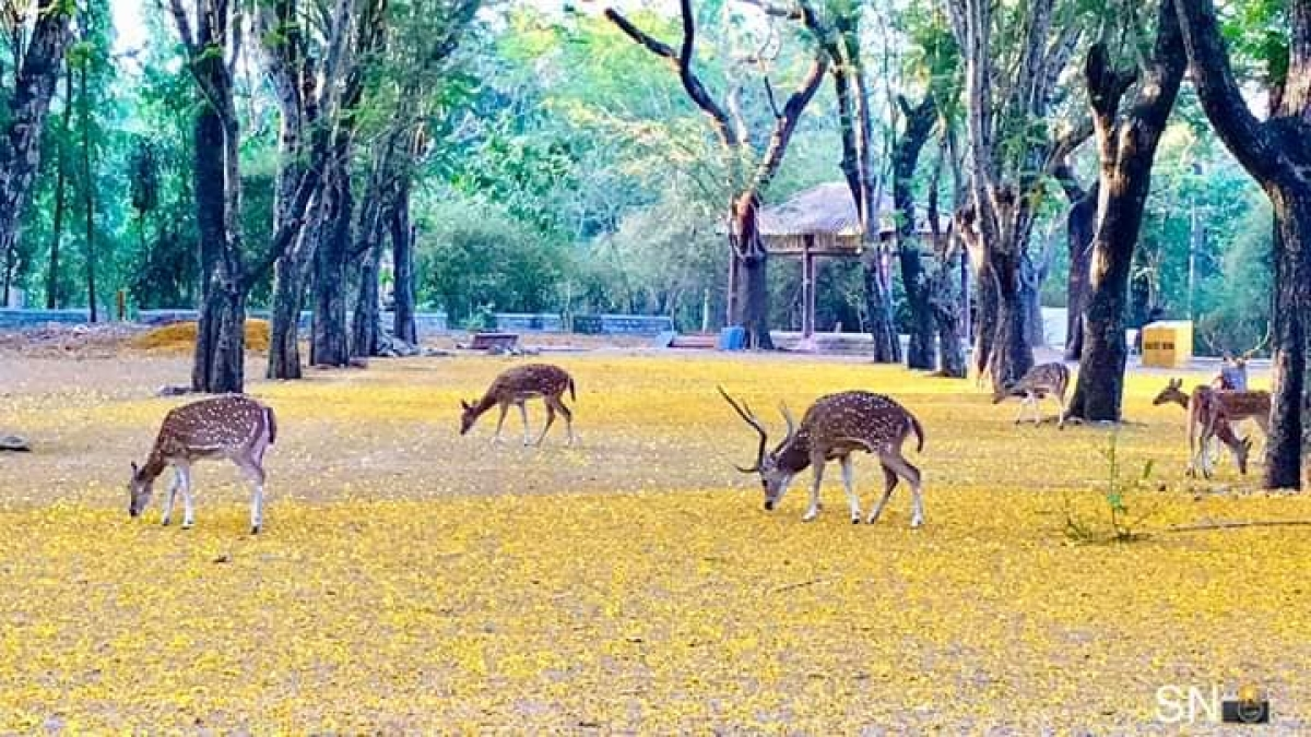 Mother celebrates lockdown: Check out beautiful pics of Sanjay Gandhi National Park