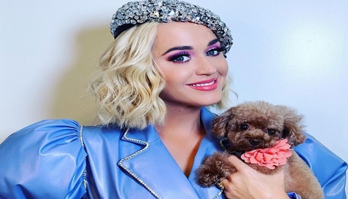 Have to be really creative to entertain viewers: American Idol judge Katy Perry