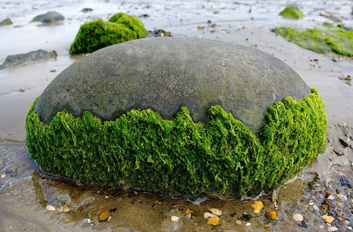 Cheap COVID-19 test kits may soon be a reality, thanks to algae