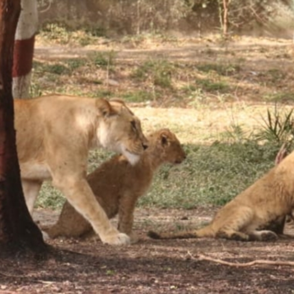 Indore zoo-keepers taking care to keep inmates cool amid high temperature