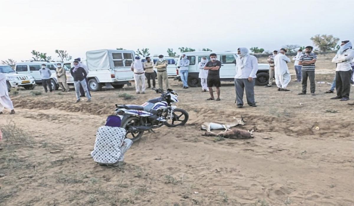 Threat to Rajasthan wildlife