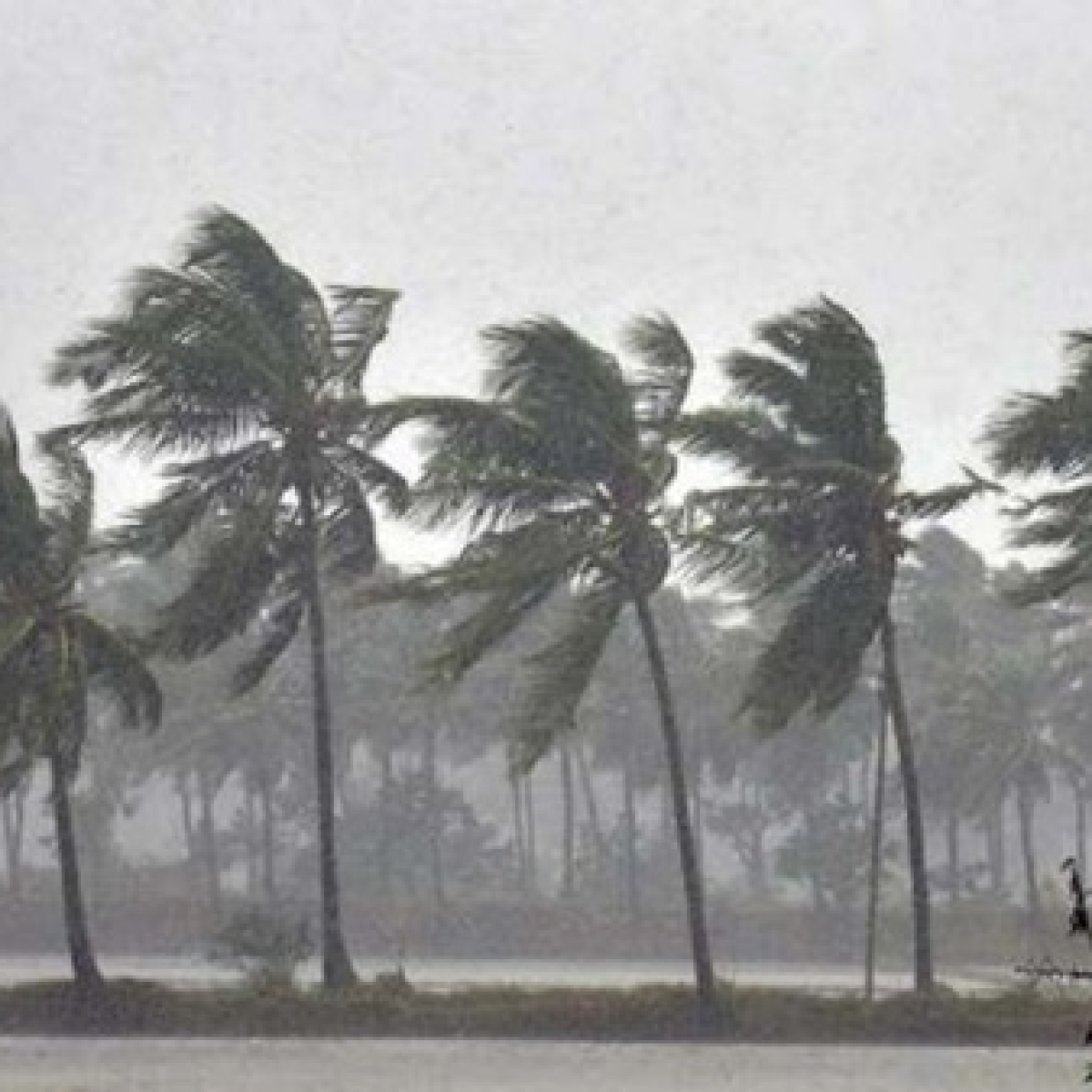 IMD issues red alert to coastal Maharashtra, Gujarat in wake of cyclonic storm in Arabian Sea