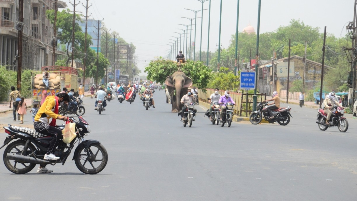 Disturbing Normalcy: Ujjain falls under Red Zone, however, commuters and even animals throng Agar Road despite tall claims of administration pertaining to restrictions in force as the city enters Lockdown4.0.