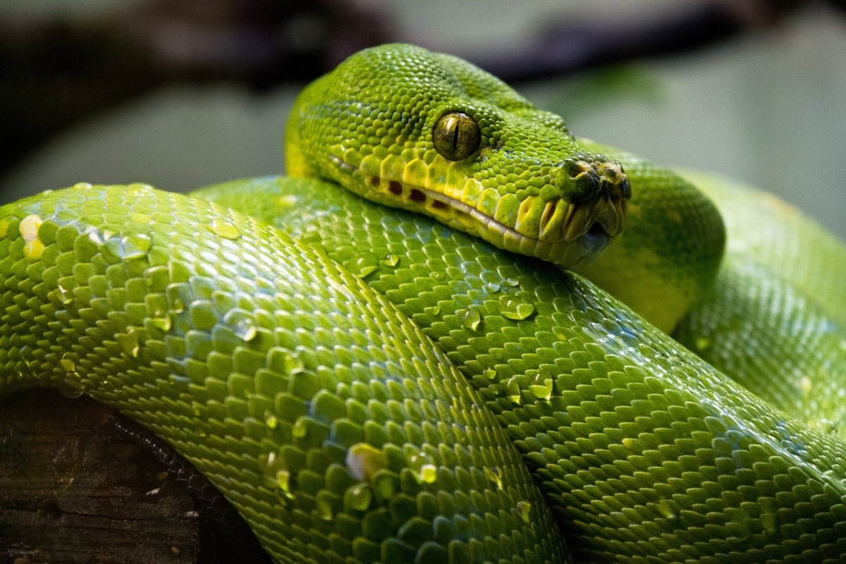 Wine-shop diaries: Drunk man in Karnataka bites snake to death after it crosses his path