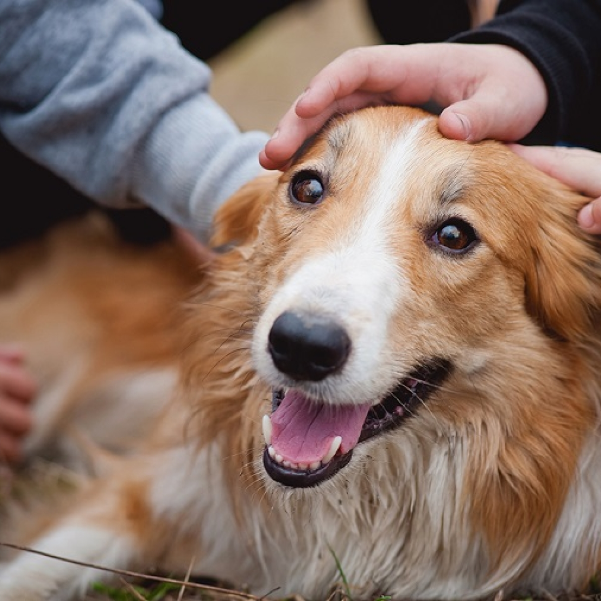 Pets may relieve stress for parents of kids with autism: Study