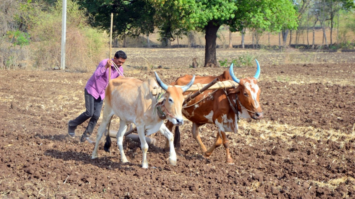 Policy Watch: What Atma Nirbhar Bharat could learn from the USDA