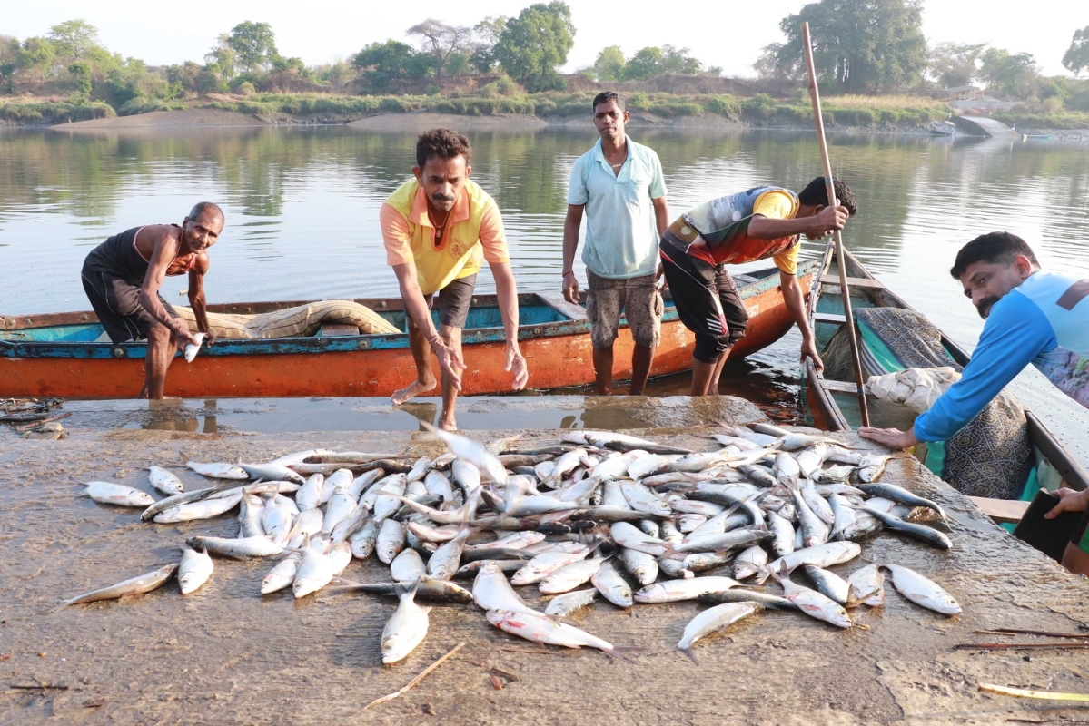 Kalyan fishermen rejoice as catch surges