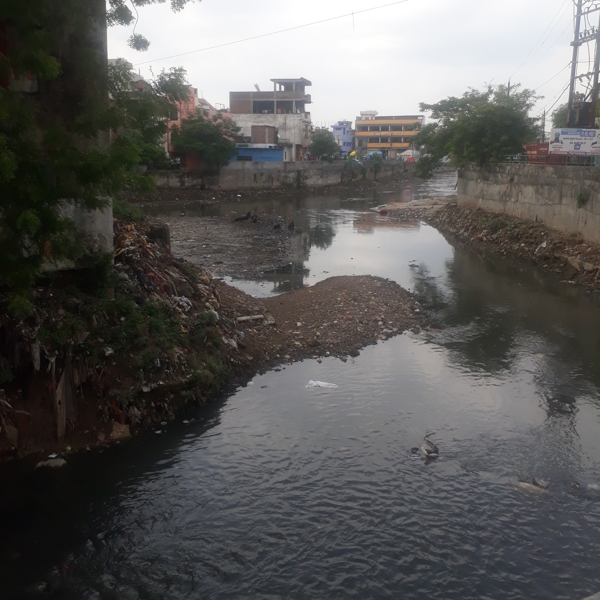 Bhopal: Filth starts accumulating in nullahs again, BMC yet to act