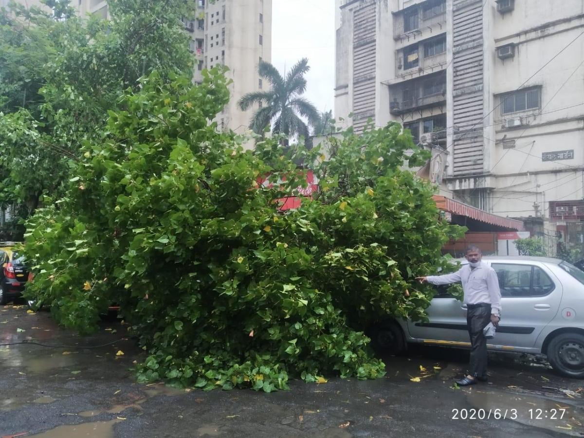 The tree that fell at Kalachowki
