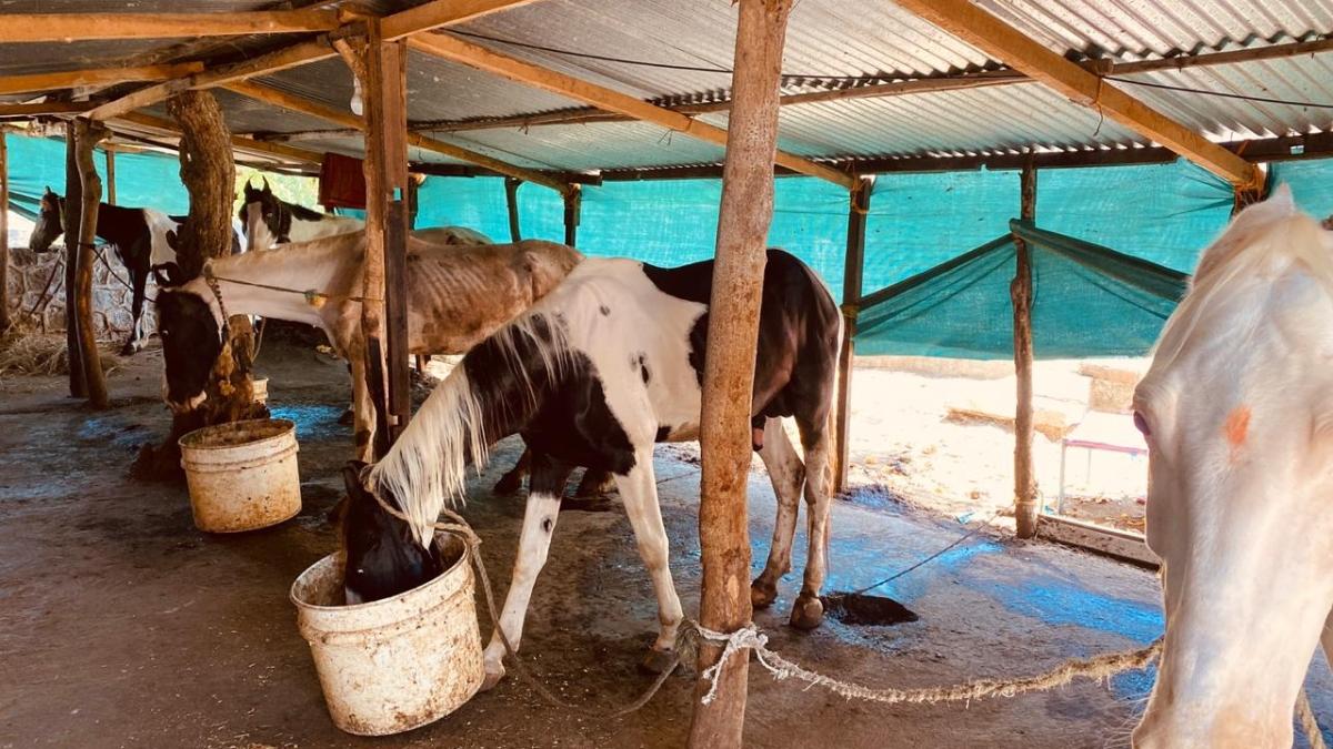 Are horse and hand carts back in service at Matheran: Bomaby HC asks Maharashtra govt