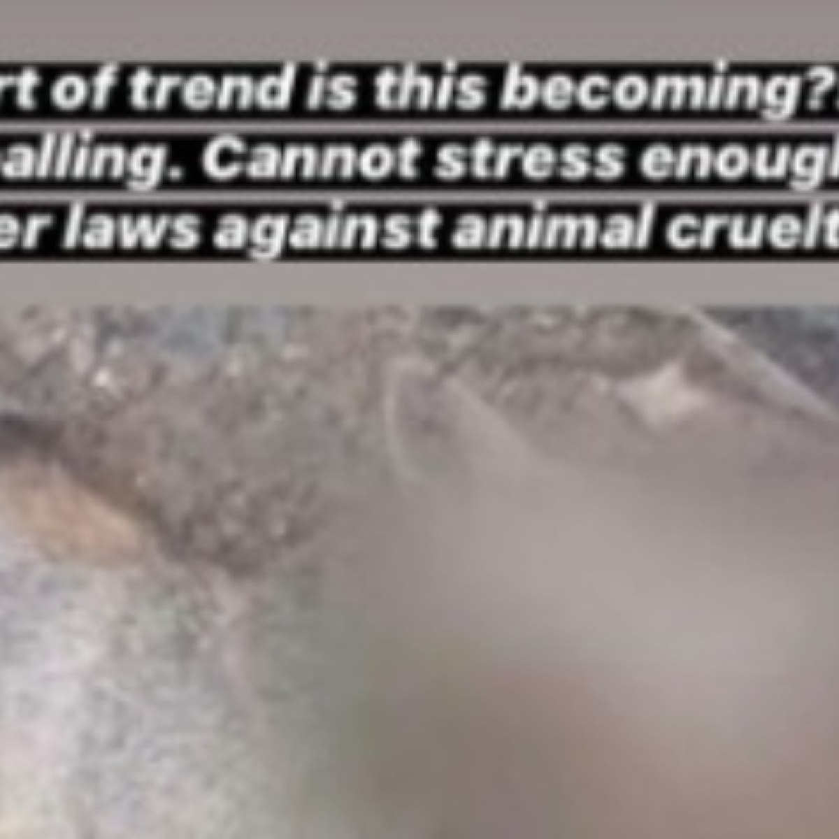 Anushka Sharma calls killing of jackal with meat bomb 'appalling', demands stricter laws against animal cruelty