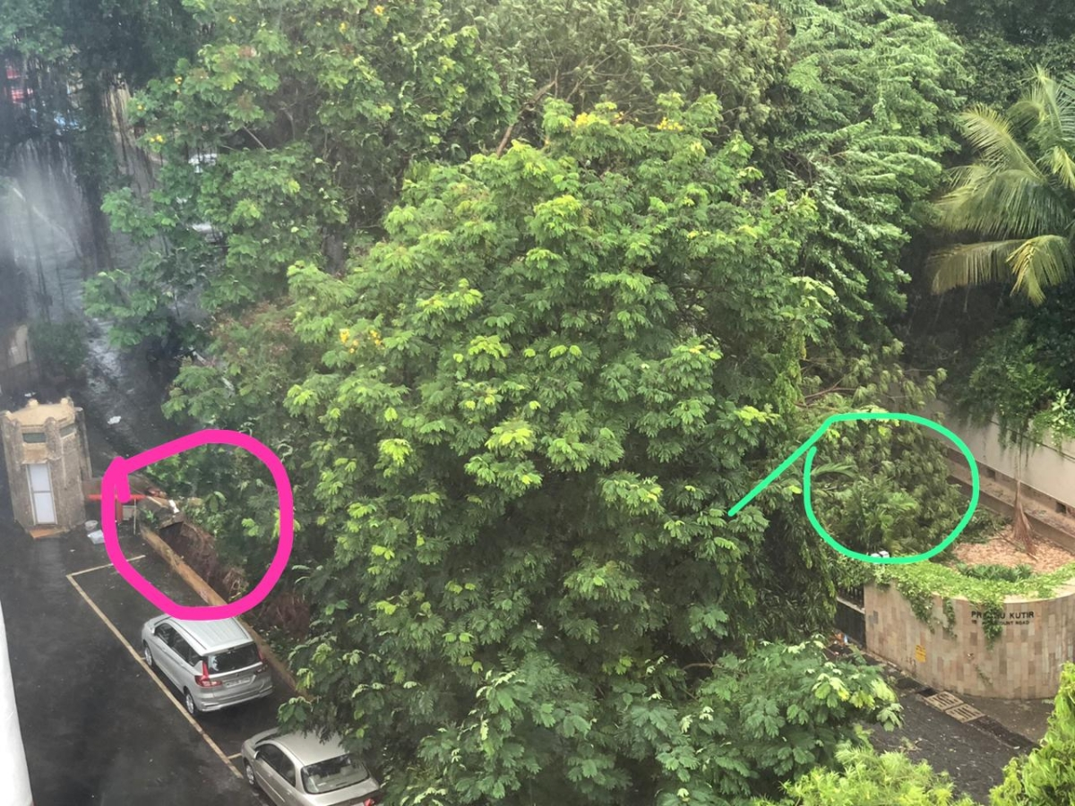Cyclone Nisarga: Tree falls 240 metres away from Mukesh Ambani's home Antilla in Mumbai; no injuries