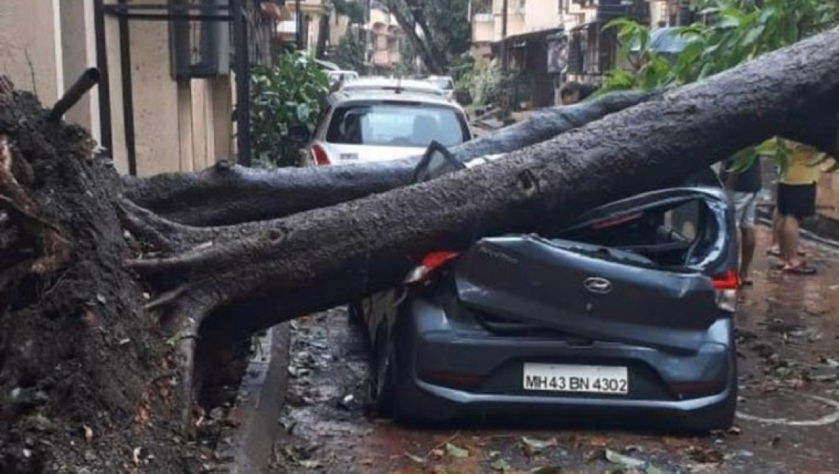 Cars trapped under fallen trees; citizens evacuated from damaged homes -- How Cyclone Nisarga hit Navi Mumbai
