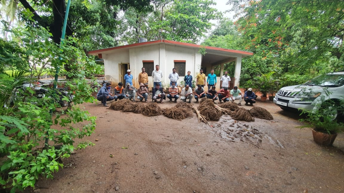 Maharashtra: Wildlife crime racket with international links busted in Satara
