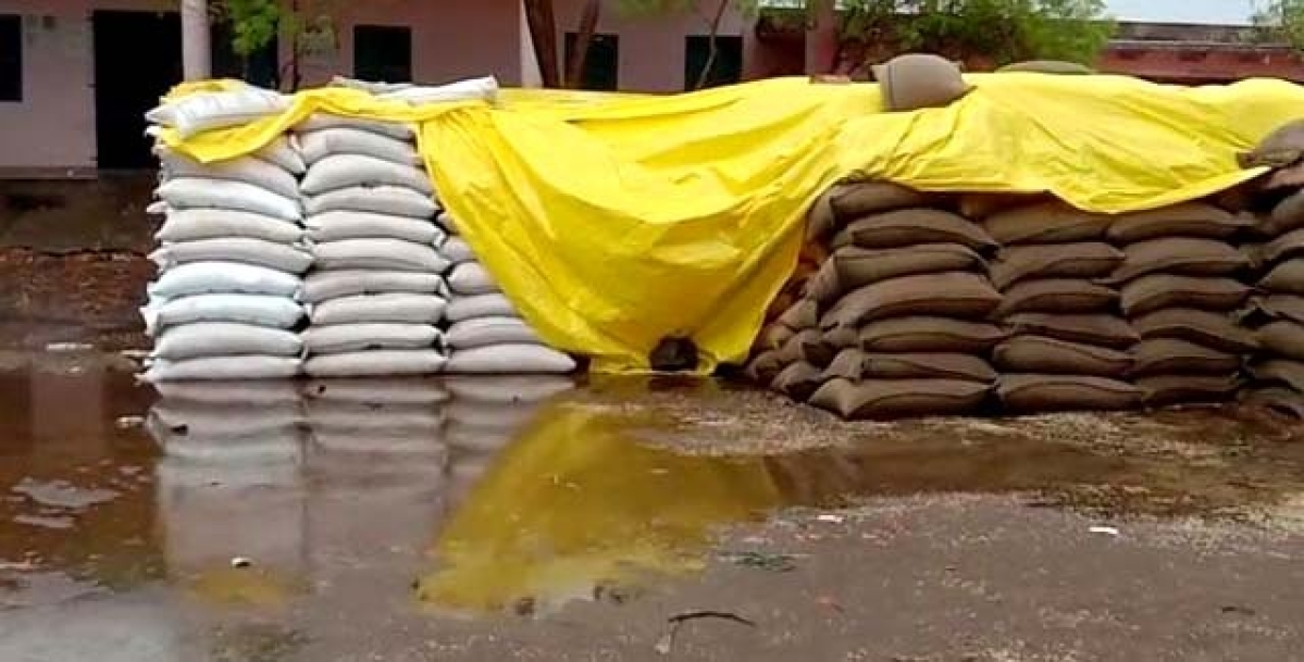 Madhya Pradesh: In Sehore, 40,000 metric wheat lying wet at 25 purchase centres