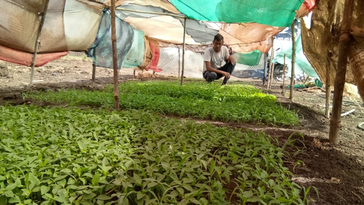 Corona woes: MP vegetable growers fail to recover their expenses