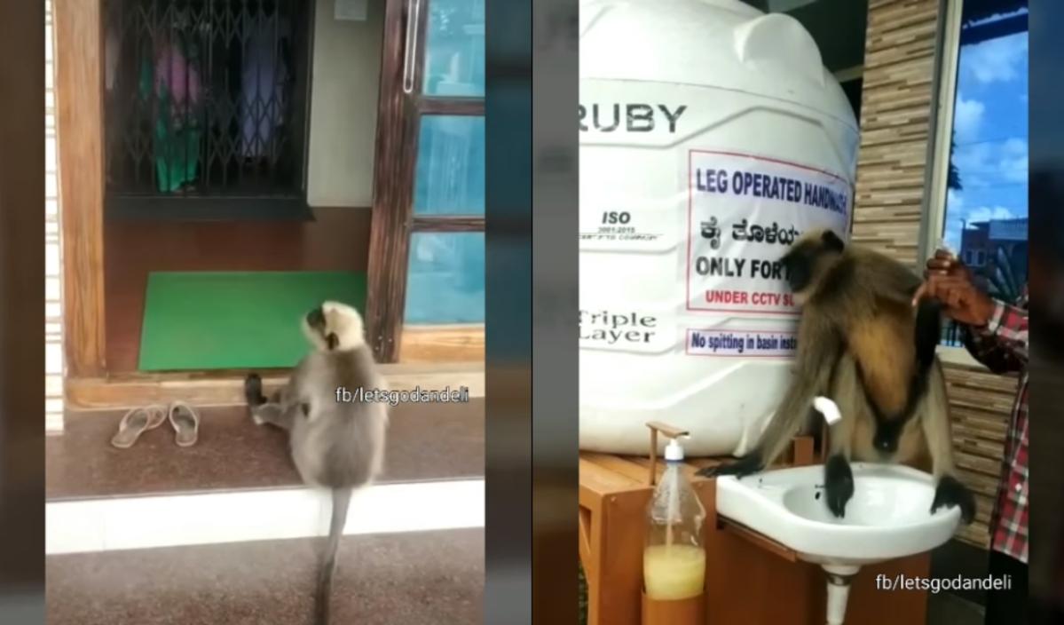 Watch: Wounded monkey gets treated at Karnataka hospital