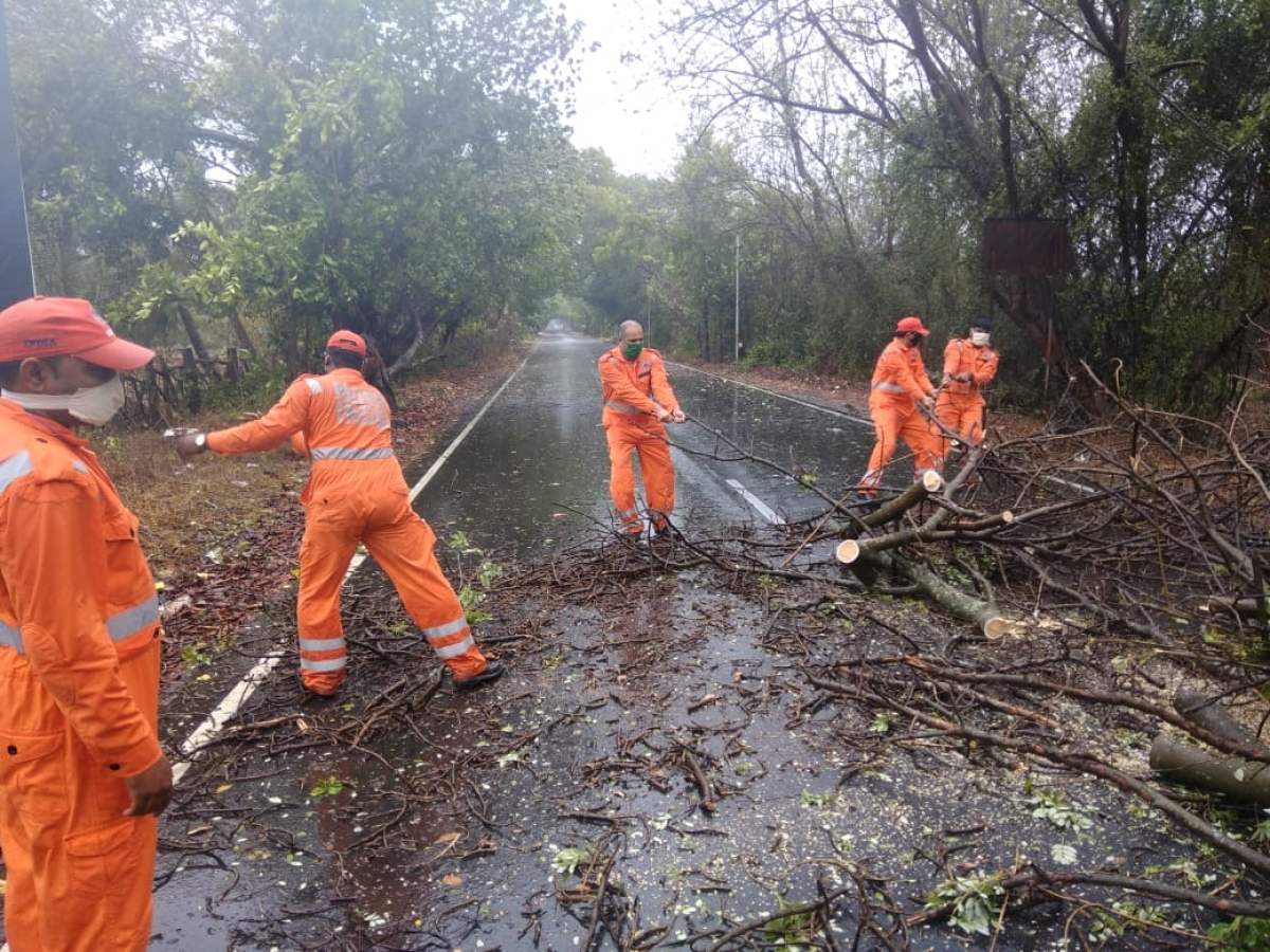 NDRF officials in full swing while clearing a tree that fell