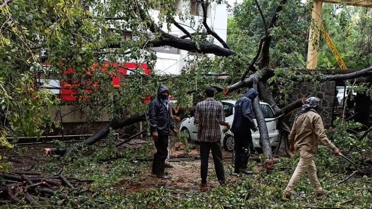 Cyclone Nisarga affects Pune: Mayor Murlidhar Mohol advises citizens to stay indoors as trees collapse