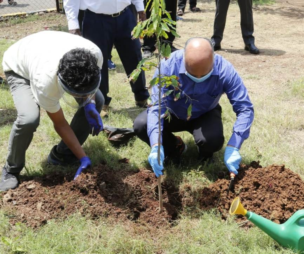 Central Railway plants trees to mark World Environment Day