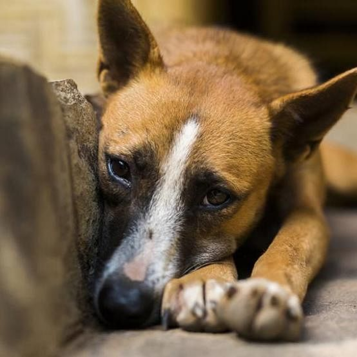 Mumbai: Man brutally assaults two stray dogs with an iron rod; both go missing