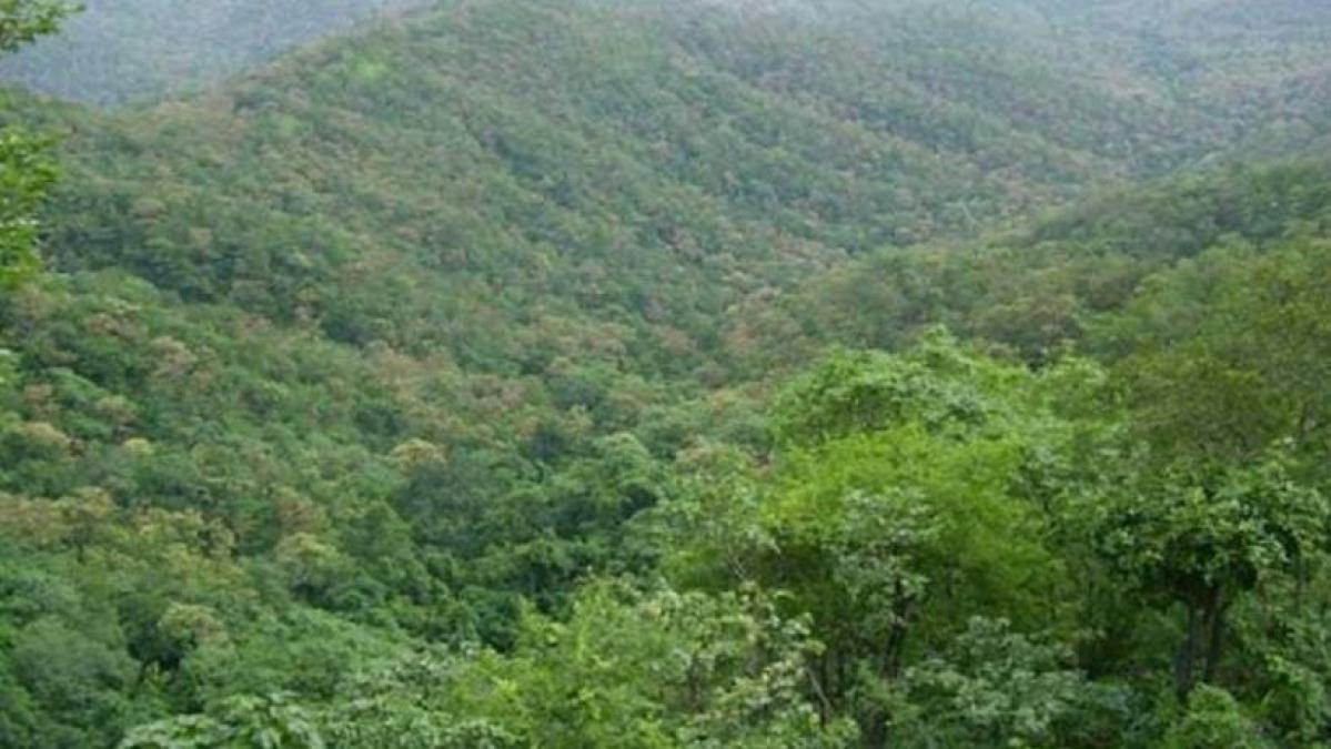 Priti Gandhi slams Dia Mirza, says Railways isn't 'acquiring fresh land in Melghat Tiger Reserve'