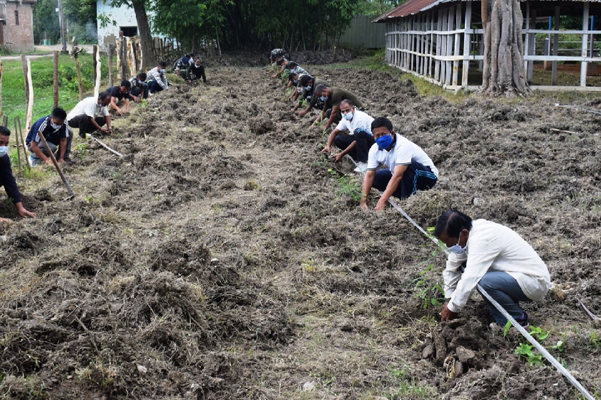 Group Centre CRPF plants large number of trees to save Environment
