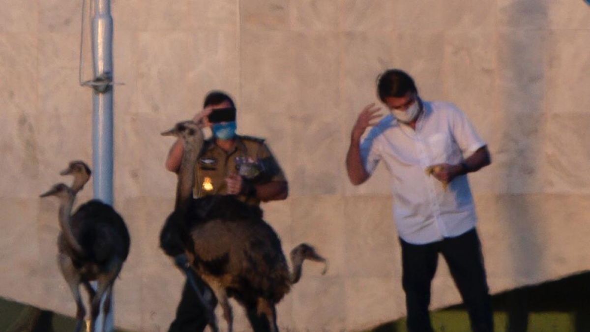 Not the peck he was looking for: Rhea bird bites Brazil president Jair Bolsonaro amid quarantine