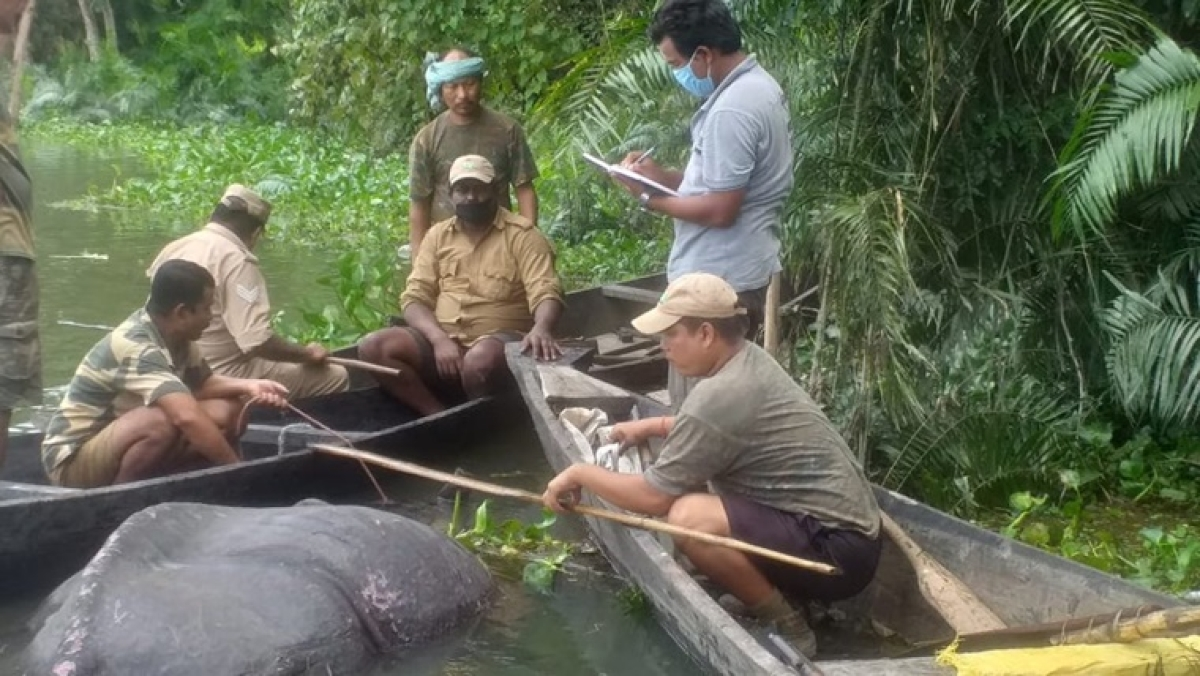Heart-breaking: Rhinoceros, who was found resting on a highway in Assam, dies