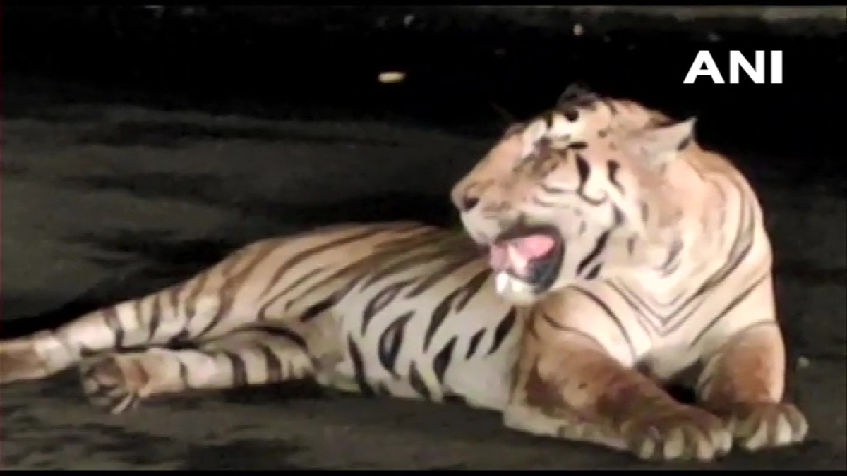 State forest department finds evidence of multiple tigers in Sahyadri Tiger Reserve