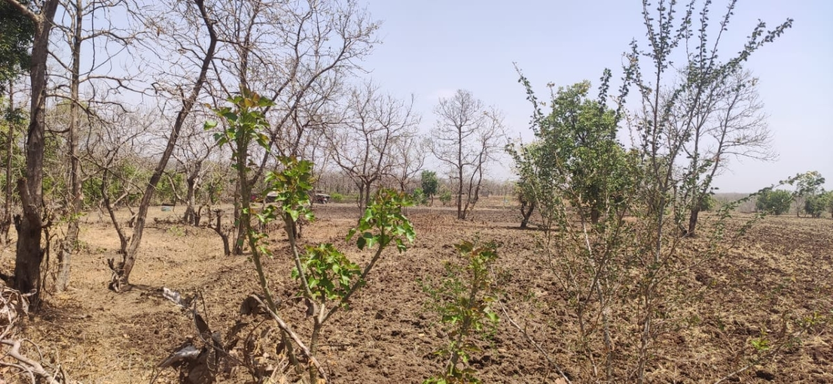 Indore: Forest department dragging feet over removing encroachment