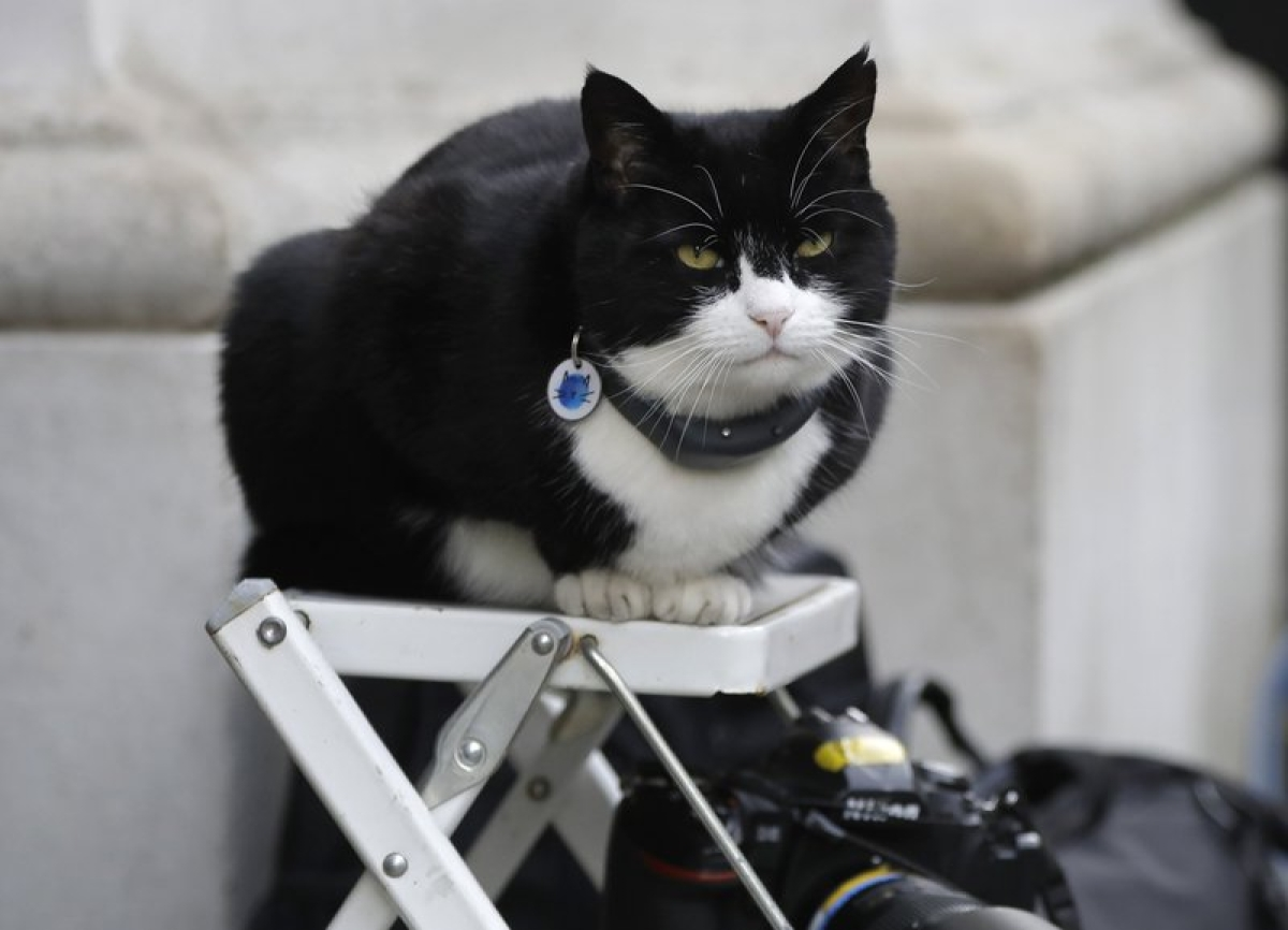 UK Foreign Office's Chief mouser with 100K twitter followers retires