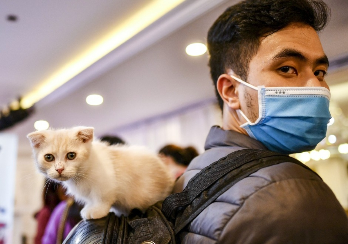 Antiviral drug for cats may help fight Covid-19 in humans