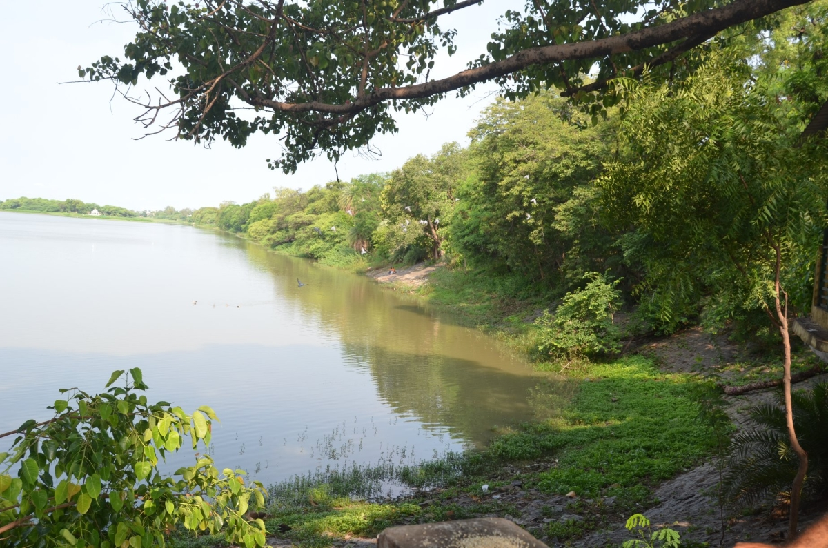 Sirpur Lake, Indore's only green lung, to become biodiversity heritage site
