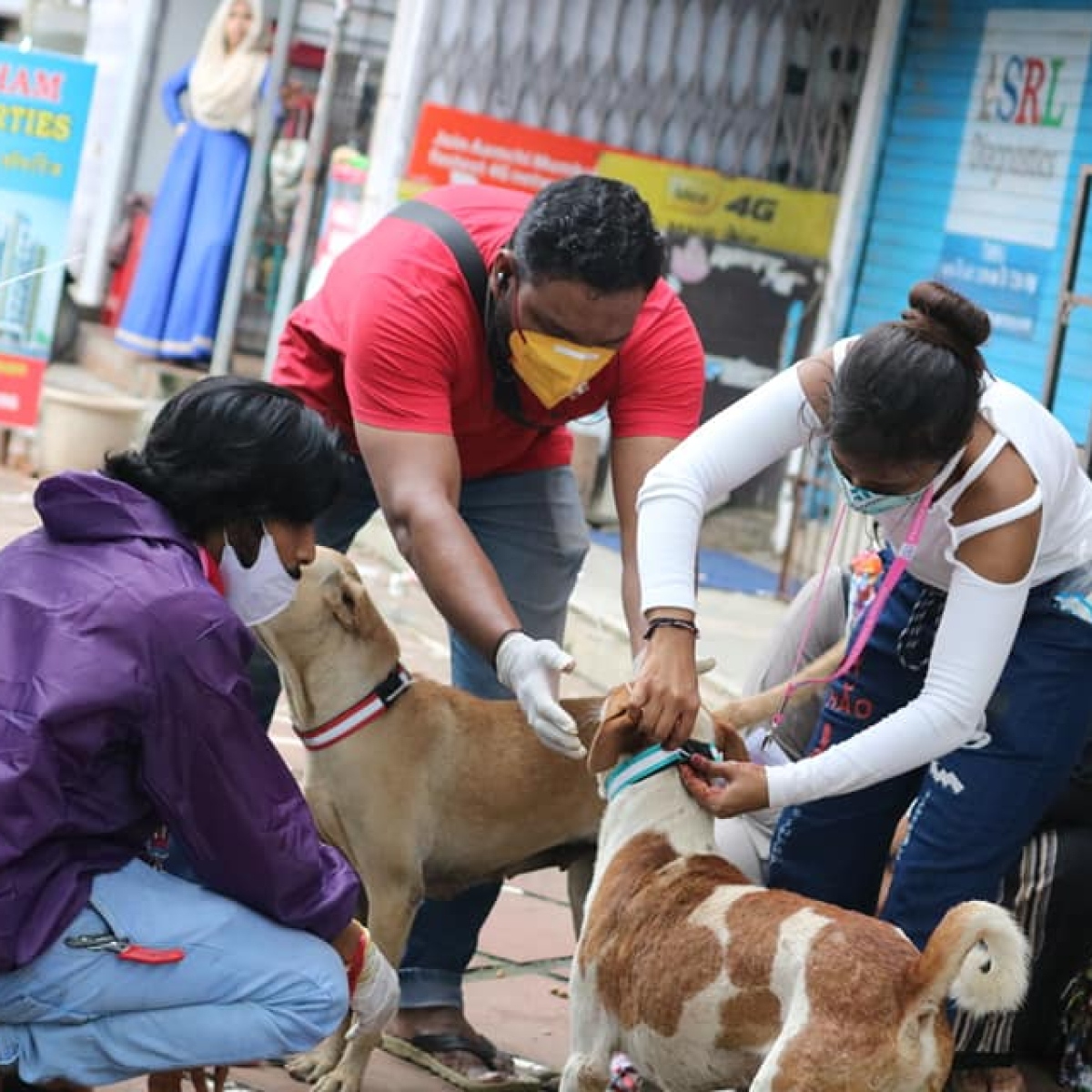 Stray Animals in Mira-Bhayandar Get Radium Belts on Independence Day 2020