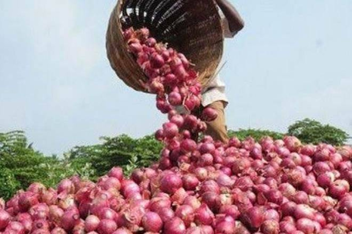 Madhya Pradesh: Bumper yield of onions, state to contribute to Centre's  2 lakh tons buffer stock, a record