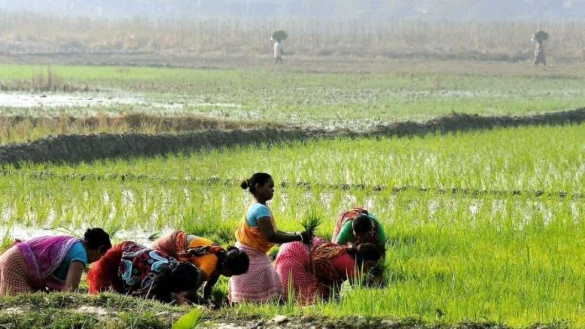 Reforms have only, and only  farmers' interests at heart