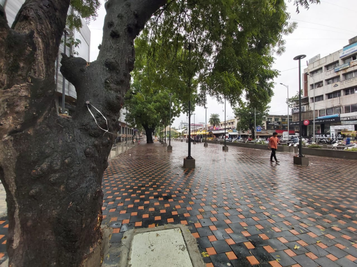 Indore: Smart city changes plan to uproot trees for parking lot