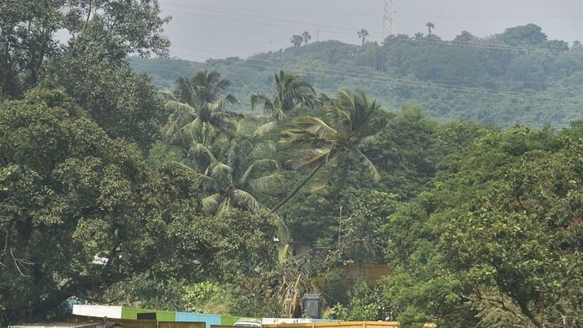 Mumbai: 328.90-hectare of Aarey land declared as reserved forest