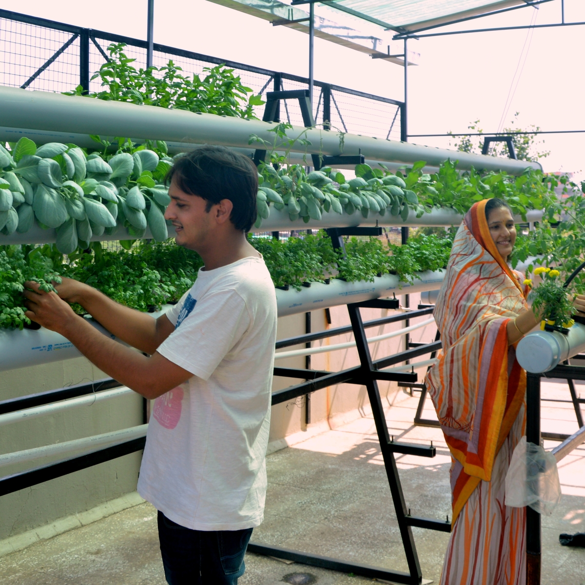 Madhya Pradesh: This couple is growing vegetables in water