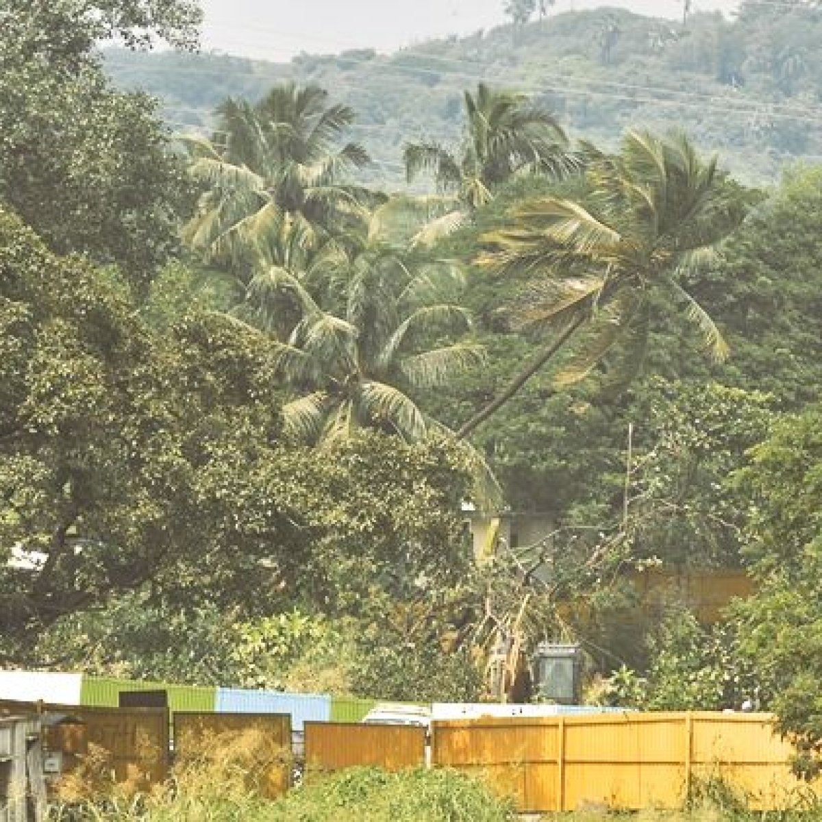 Opinion: Aarey - Mumbai's treasure trove writes MLA Sunil Prabhu
