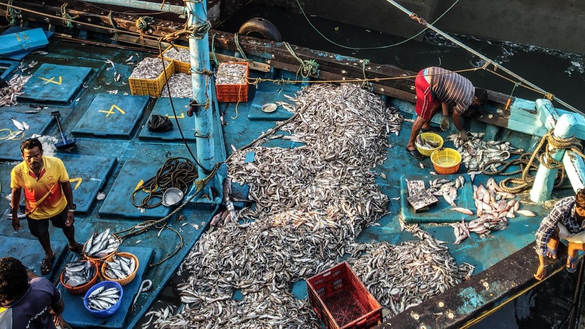 Mumbai's fishermen in crisis