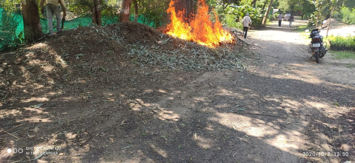 Indore: Forest department chops down, burns only black bamboo tree in city