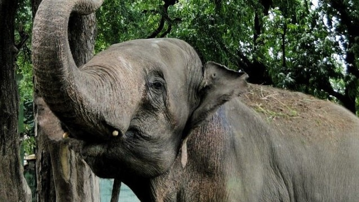 National Green Tribunal directs to probe elephant's death in Madhya Pradesh