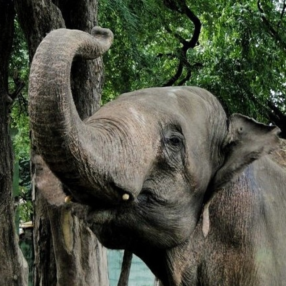 Watch Video: Elephant go on rampage at wedding in Prayagraj