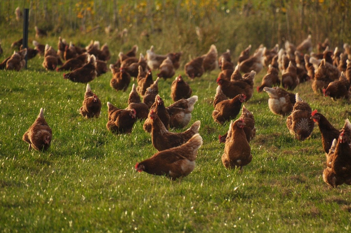 Rajasthan wildlife, animal husbandry dept on alert over avian influenza outbreak