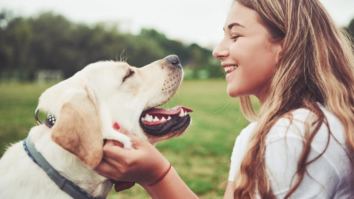 How can you keep your doggo happy?