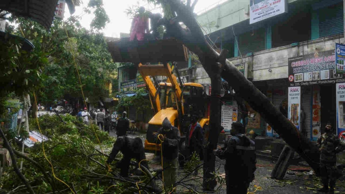 Navi Mumbai: NMMC appeals housing societies to trim trees before monsoon - Check out list of ward-wise helpline numbers