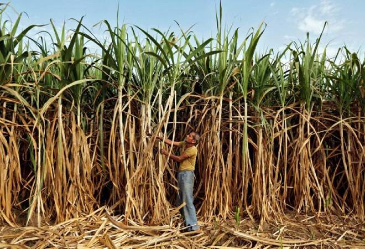 Cabinet clears modified scheme for production of 1G ethanol from feed